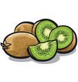 fresh kiwi fruits vector image