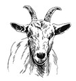 Hand sketch of goat head vector image