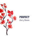 realistic sakura blossom - japanese red cherry vector image