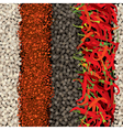 spices1 vector image