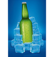 beer bottle in ice cubes with many water drops vector image