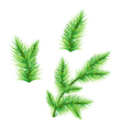 FirTree Branch vector image