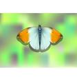 orange tip butterfly vector image vector image