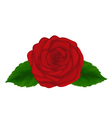 red rose with green leaves isolated on white backg vector image