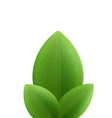 plant three realistic green leaves isolated on vector image