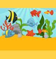 aquarium tropical fishes and plants vector image