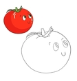 Educational game coloring book tomato vector image