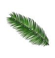 Full fresh leaf of sago palm tree sketch vector image vector image