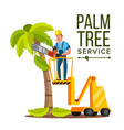 palm tree care trimming tree or removal to vector image