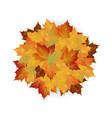 autumn fallen leaves leafs element floral vector image