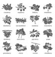 Berries Monochrome Icons Set vector image