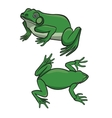 Two green frogs vector image