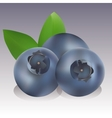 realisctic Blueberry vector image