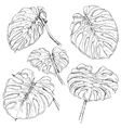 doodle monstera set vector image vector image