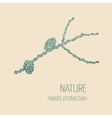 Larch branch vector image