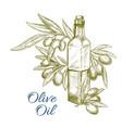 olive oil bottle and olives branch sketch vector image