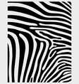 skin of zebra 2 vector image