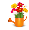 Colorful fresh spring flowers in orange watering vector image