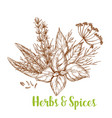 herbs and spices sketch with basil and rosemary vector image
