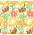 sketch background fruit citrus vector image
