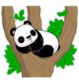 Panda sleeps on the tree vector image