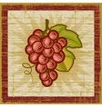 Retro grapes bunch vector image