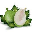 breadfruit vector image
