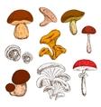 Ripe fresh mushrooms sketch symbols vector image