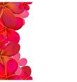Color Frangipani Frame vector image