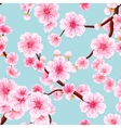 Seamless of pink Sakura EPS 10 vector image