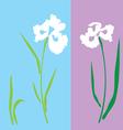 iris white vector image