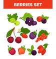 berries isolated icons set vector image