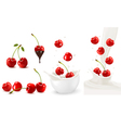 Set of ripe sweet cherries with leaves and splash vector image