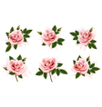 Beautiful set of pink ornate roses with leaves vector image