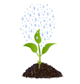 Green Young plant with rain drops vector image vector image