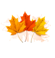 Autumn background with a three colorful leaves vector image