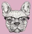 hipster geek french bulldog vector image