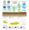 Gardening work farming infographic Corn Graphic vector image