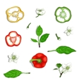 Paprika Sweet Pepper Elements Collection vector image