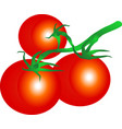 tomato branch vector image
