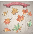 Set of autumn leaves of maple chestnut and other vector image vector image