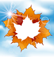 Autumn leaves maple with copy space vector image