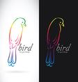 Bird drongo vector image