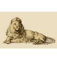 Lion sitting drawing vector image
