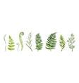 eucalyptus tree designer art different foliage vector image