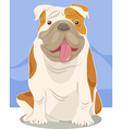 english bulldog dog cartoon vector image vector image
