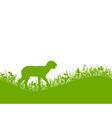 Lamb on meadow vector image vector image