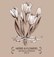 White Tulips vector image
