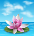 water lily nenuphar spatter-dock pink lotus on vector image
