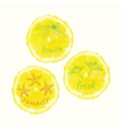 watercolor orange slice circles hand drawn doodle vector image
